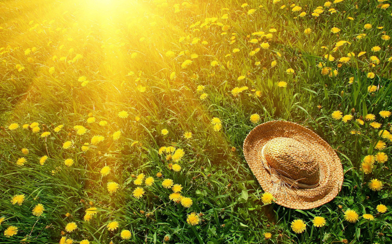 6943122-summer-sun-hat