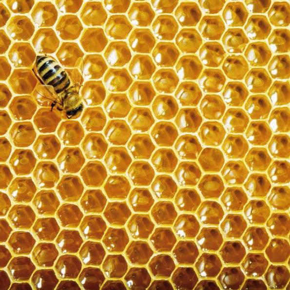 СЛОЎНІК Пчолы і мёд