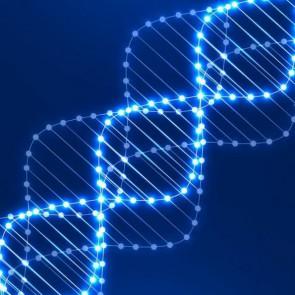 СЛОЎНІК Генетыка