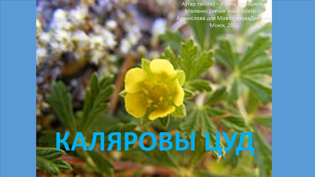 ЗАГАДКi пра КВЕТКi — альбом ПДФ ад Алены Церашковай
